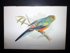 Greene Parrots in Captivity 1887 HC Bird Print. Many Coloured Parakeet Australia